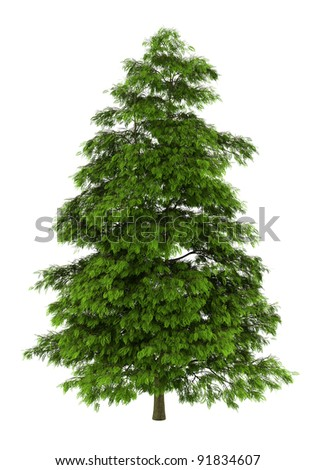 tree of heaven isolated on white background #91834607