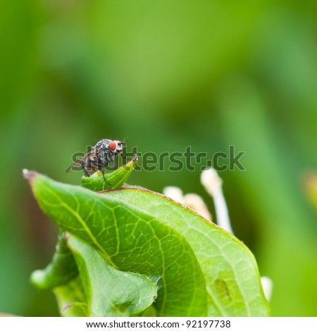 A macro shot of a fly, covered in pollen, sitting on a green leaf. #92197738