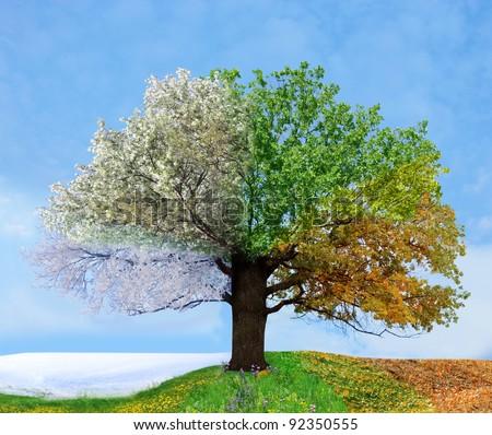 Four season tree Royalty-Free Stock Photo #92350555