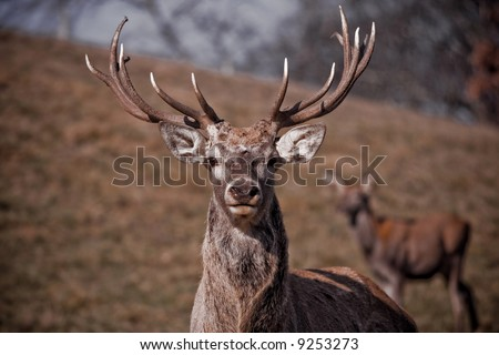 The deer in the brown coarse grass #9253273