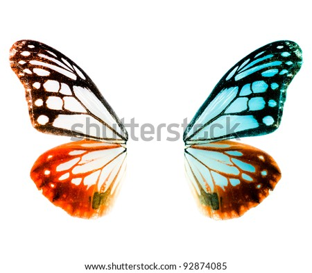 butterfly wing Royalty-Free Stock Photo #92874085