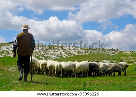 Shepherd with his sheep on pasture #93096226