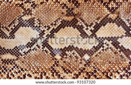 Snake skin pattern background #93107320