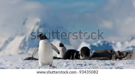 penguins resting on the stony coast of Antarctica