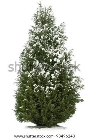 Fur tree with snow isolated on white background #93496243