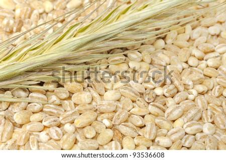 Pearl Barley with Ear #93536608