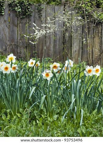 spring in garden #93753496