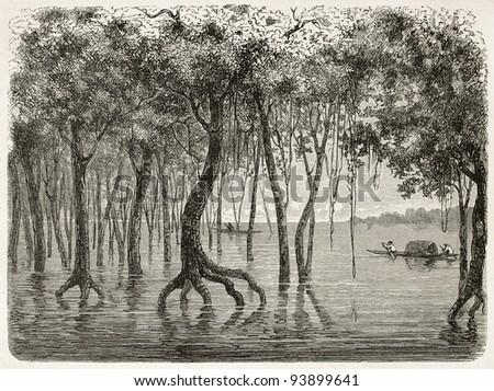 Amazonas flooding forest old illustration. Created by Riou, published on Le Tour du Monde, Paris, 1867