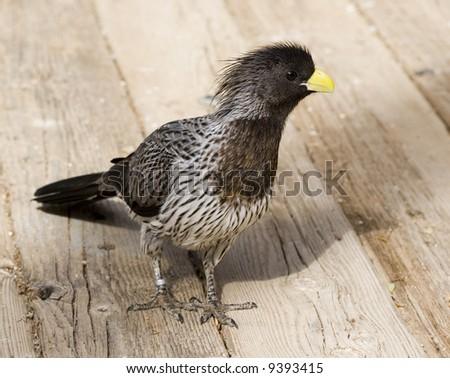 Yellow-beaked baby bird on blur background; close up #9393415