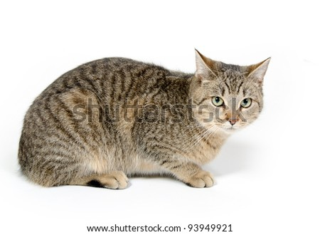 Cute tabby cat laying down on white background #93949921