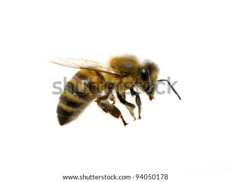 bee isolated on the white #94050178