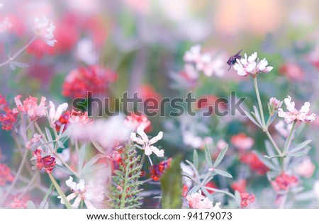 Dream-field with flowers and fly #94179073
