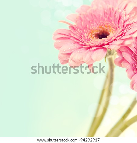 Close up abstract of colorful pink daisy gerbera flowers #94292917