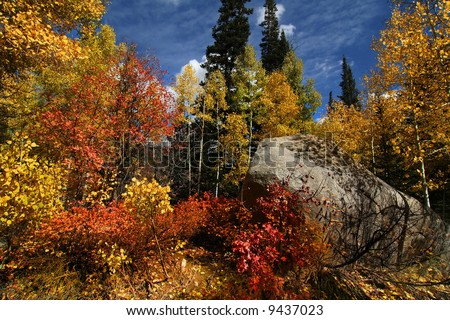 Fall shot of trees in the autumn showing  bright fall colors