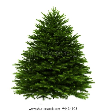 momi fir tree isolated on white background #94434103