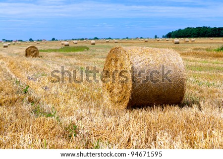 big bales of straw on a harvested field, Poland #94671595