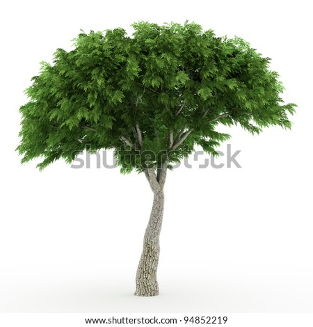 side view of Rendered 3d sassafras  isolated over white #94852219