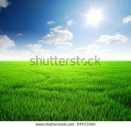 Rice field green grass blue sky cloud cloudy landscape background #94915060
