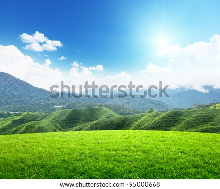 field of spring grass and mountain #95000668