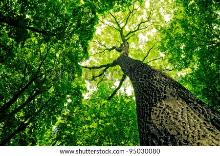 forest trees. nature green wood sunlight backgrounds. #95030080