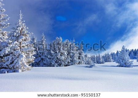 blue and white winter composition