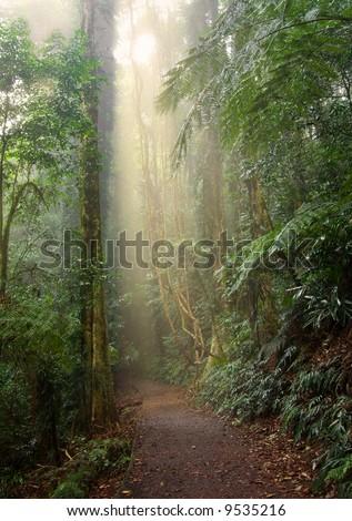 light beam in the beauty of the dorrigo world heritage rainforest