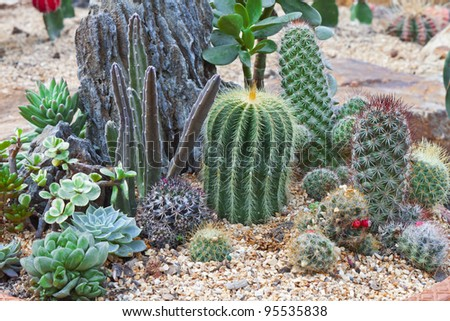 Cactus plants on sandy soil in the garden. #95535838