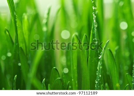 Water drops on the green grass #97112189