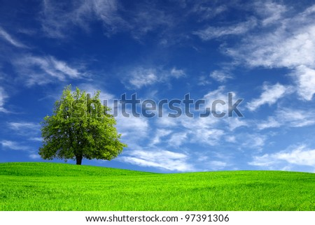 Green meadow and tree #97391306
