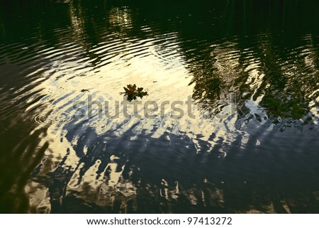 Dark Water #97413272