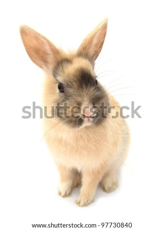 Rabbit bunny baby isolated on white background