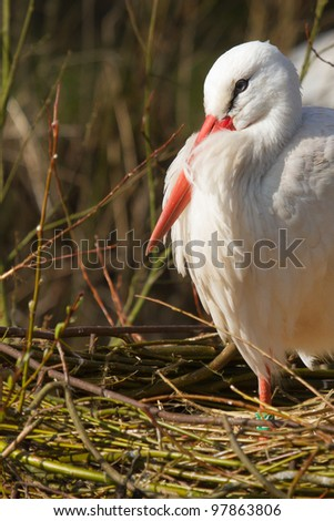 A stork is resting in its nest #97863806