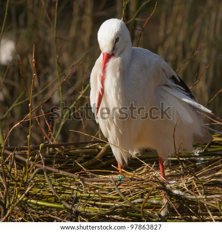 A stork is resting in its nest #97863827
