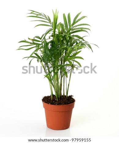 Flower in a pot #97959155