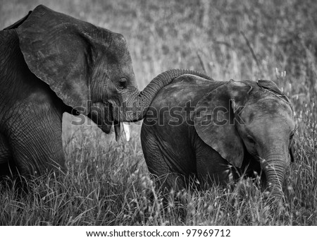 Touching Black and White Picture of Baby Elephant in Poignant Pose With Its Mother