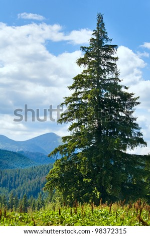 Summer mountain landscape with big fir tree on Goverla Mount background #98372315