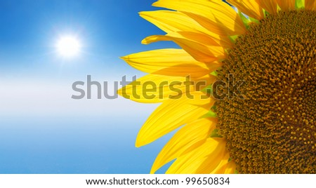 Sunflower and bright glow sun. Abstract composition #99650834