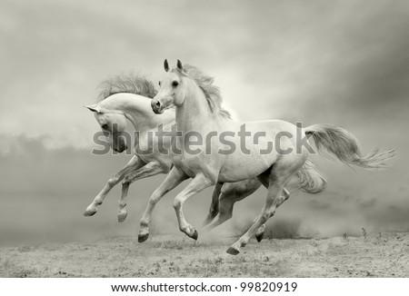horses in summer #99820919