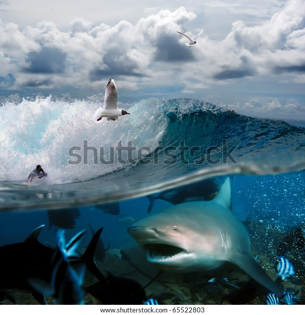 image about the ocean and the surfer on the wave of a cloudy sky over him with the flying seagulls and angry hungry shark