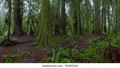 Image of ancient rainforest, Cathedral Grove, Vancouver Island, BC, Canada