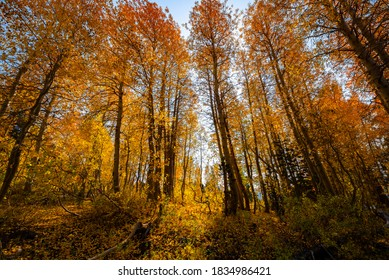 Image of an Autumn forest