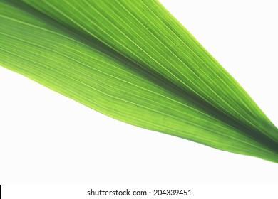 An Image of Balun