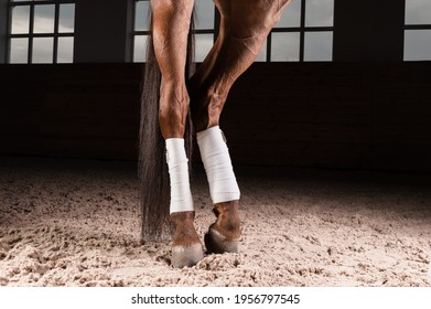 Image of the bandaged hooves of a thoroughbred horse. Competition preparation concept. Mixed media