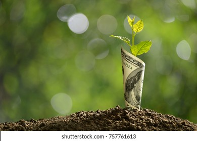 Image of bank note with plant growing on top for business, saving, growth, economic concept