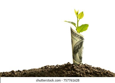 Image of bank note with plant growing on top for business, saving, growth, economic concept isolated on white background