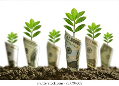 Image of bank notes rolled around plants on soil for business, saving, growth, economic concept isolated on white background