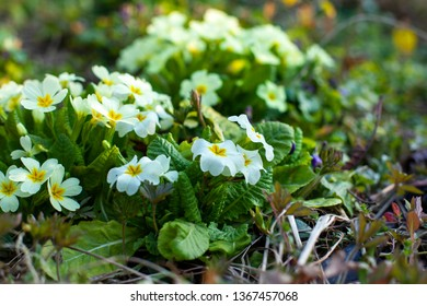 Image of beautiful bush garden flowers. Close-up with blurred background.