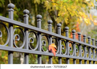 Image of a Beautiful decorative cast iron wrought fence with artistic forging. Metal guardrail close up.Abstract autumn backgrounds.