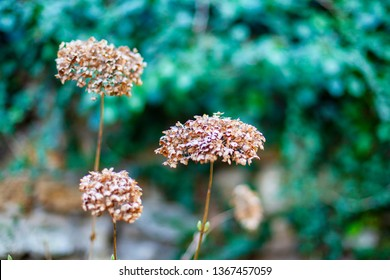 Image of beautiful dried flowers. Close-up with blurred background.