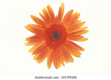 The image of beautiful flower